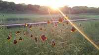 Evening Wildflowers by Jason Smith